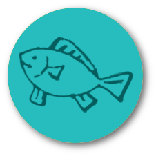 Trafoon fish